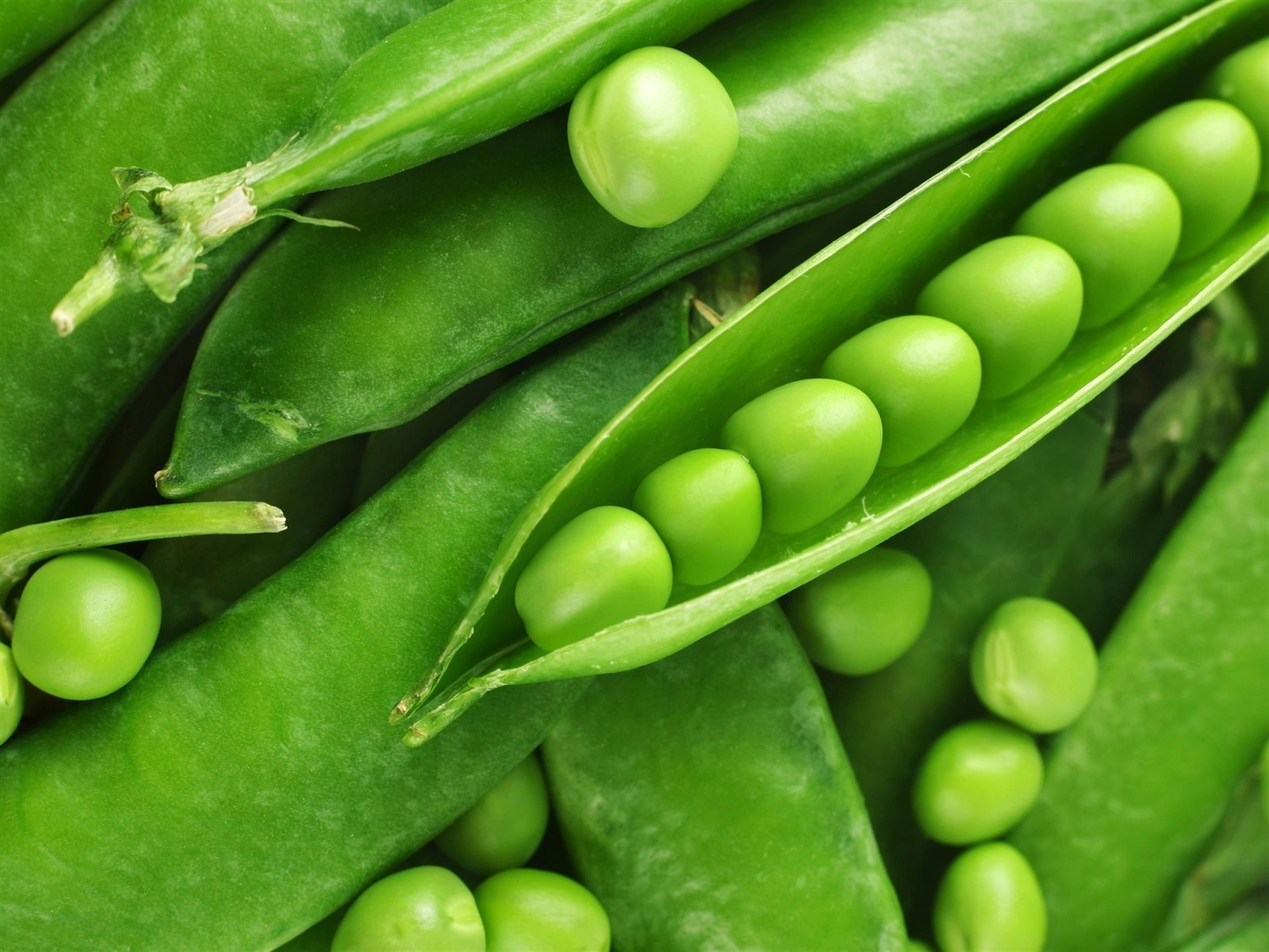 fresh_green_peas-Plant_close-up_wallpaper_1600x1200
